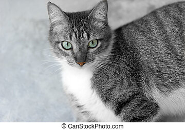 gato, olhos