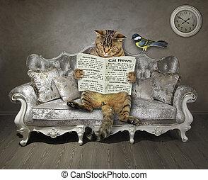 gato, periódico, sofá, elegante