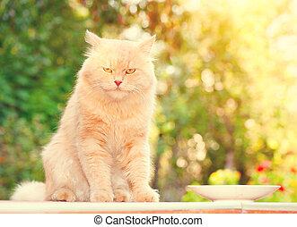 gato, portrait., lindo, rojo, gato grande, retrato, encima, naturaleza, verde, fondo velado
