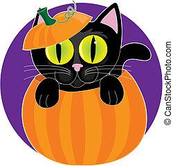 gato preto, em, abóbora