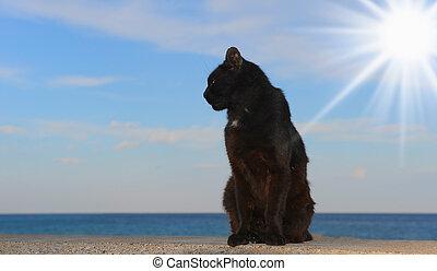 gato que sienta, en la playa
