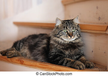 gato que sienta