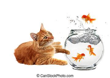 gato, relaxante, e, observar, um, peixe ouro, fuga, seu, tigela