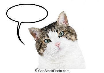 gato, retrato, encima, blanco, aislado, plano de fondo, con, blanco, globo de idea, con, copyspace, .