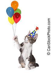 gato, segurando, aniversário, balões, desgastar, um, chapéu...