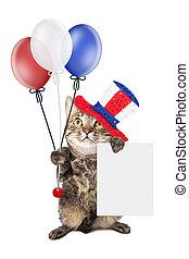 gato, segurando, sinal branco, dia, independência