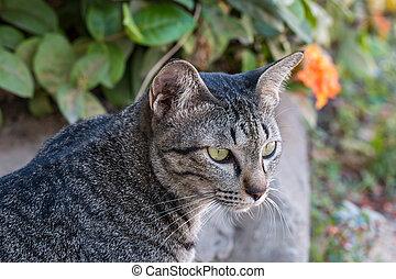 gato senta-se, em, a, garden.