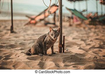 gato, siting, praia