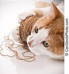 gato, tocando, com, um, lã, bola