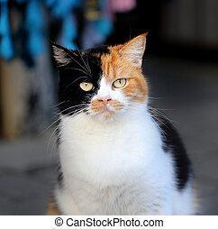 gato, tres, coloreado