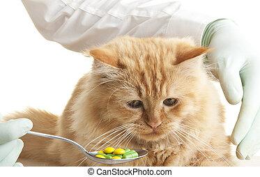 gato, veterinario, mirada, mano animal