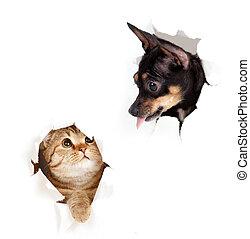 gato, y, perro, en, papel, lado, rasgado, agujero, aislado