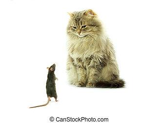 gato, y, rata