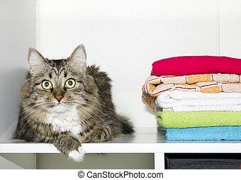 gato, y, toallas, en, guardarropa
