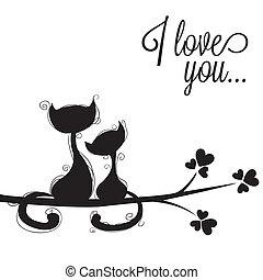gatos, amores