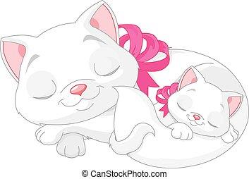 gatos, branca