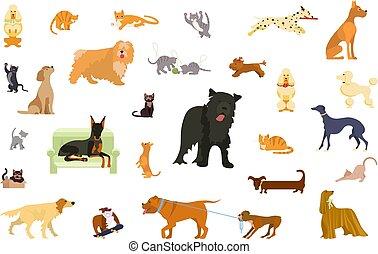 gatos, cachorros, pacote