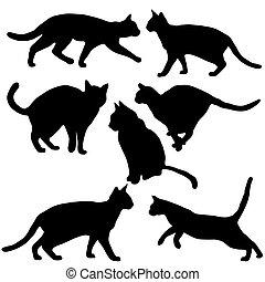 gatos, cobrança, -, vetorial, silueta
