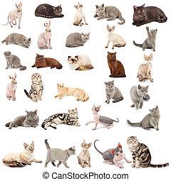 gatos, colección