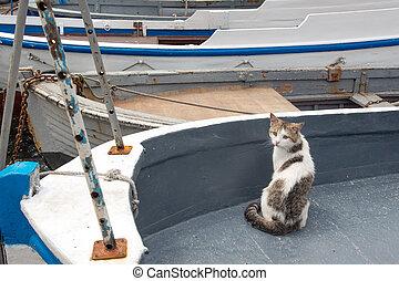 gatos, de, balaklava