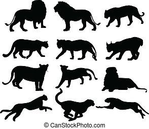 gatos grandes