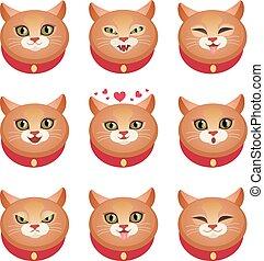 gatos, jogo, emoções