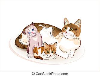 gatos, kittens., gato, family.