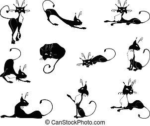 gatos, pretas