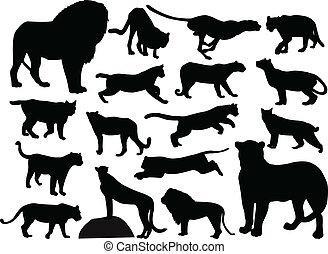 gatos selvagens, silhuetas