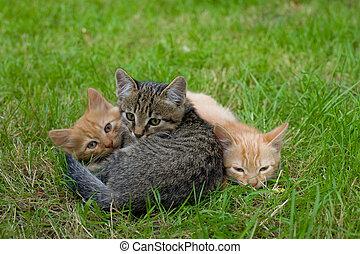 gatti, amici, tre