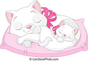 gatti, bianco