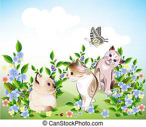 gattini, gioco, poco, farfalla, felice, prato