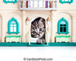 gattino, guardando fuori, casa giocattolo, porta