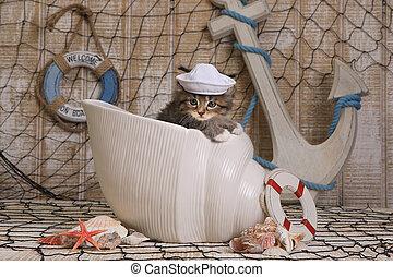gattino, oceano, fondo, themed