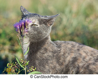 gatto blu