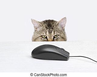 gatto, braccare, topo, computer