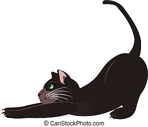 gatto che si stiracchia - gatto grigio che si stiracchia...