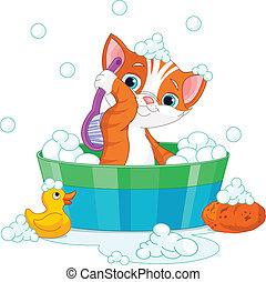 gatto, detenere, bagno