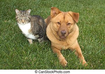 gatto, e, cane