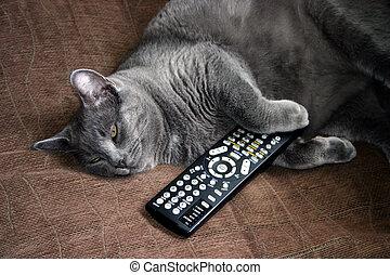 gatto, e, remoto