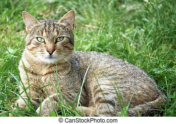gatto, erba, riposare