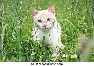gatto, giovane, erba, bello