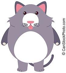 gatto grigio, faccia sciocca