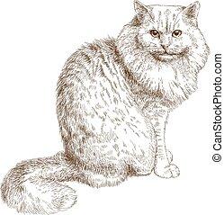 gatto, incisione, illustrazione