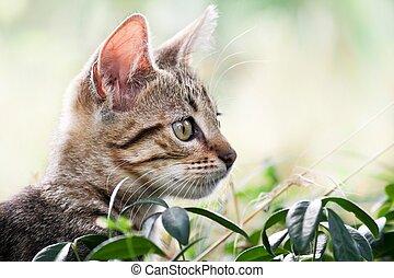 gatto, nascondigli, giochi, erba