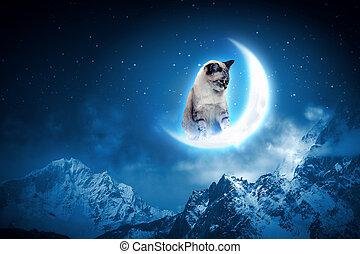 gatto, presa, luna