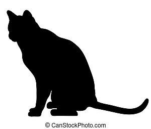 gatto siede