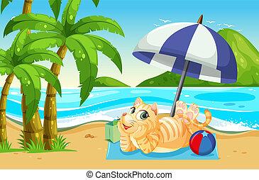 gatto, spiaggia, rilassante, prossimo