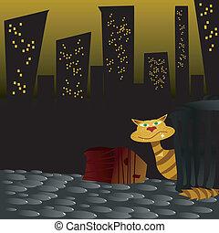 gatto, strada, notte