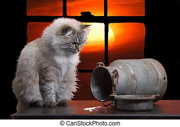 gatto, tramonto, contro, grafica